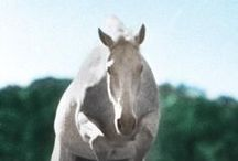Horse Books / Great horse books to fill up your library and feed your soul