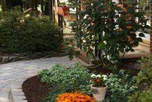 Garden & backyard / by Brittany Powell