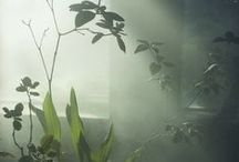 Space, garden, haverum... / by Stine Elle