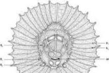 Tardigrades & Science illustrations, drawings  / videnskabelige illustrationer / tegninger / Some drawings of Invertebrates: tardigrades, Loricifera, Rotifera and Kinorhynchs  I've made at the Natural History Museum of Copenhagen, Denmark. Tegninger af bjørnedyr, mudderdrager, korsetdyr, hjuldyr mf. / by Stine Elle