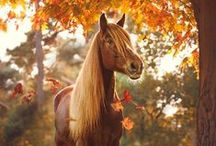 All the Pretty Ponies / Love looking at pictures of pretty horses?  Follow this board for a lovely stream of horsey eye candy!