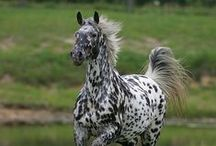 Rare Horse Breeds / Learn about some of the rare and beautiful horse breeds that you may not have heard of before.  It's amazing how much variety there is...  So many beautiful horses!