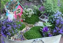 Outdoors: Fairy Garden / Fairy garden plants, miniatures,  ideas / by Julia Quintero