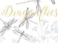 D R A G O N F L I E S / All things dragonflies