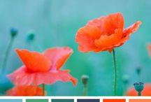 Color Combo. / by C h e r y l