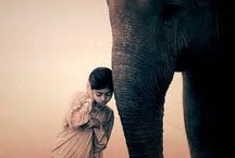 Ashes and Snow-Elephants / Gregory Colbert's breathtaking photography from the stunning Ashes and Snow collection. / by Deborah Haseltine