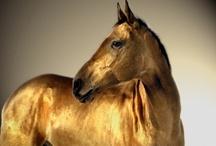 Gorgeous Horses / by Deborah Haseltine