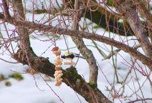 Birds in the garden / Cinciallegra (Parus major) e Pettirosso (Erithacus rubecula) fanno onore al cibo sistemato per loro in giardino, un aiuto per superare i giorni invernali, spesso caratterizzati da neve e gelo, in cui hanno carenza di cibo.