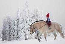 horses / Horses.