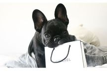 Frenchie-gans / french bulldogs, frenchies / by hilary jarman