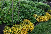 Soil & Mulch / A beautiful garden starts with great soil! Find helpful tips and facts about mulch and soil here.