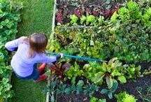 Gardening Fruits & Vegetables / Helpful tricks and tips for growing and harvesting your own fruit & vegetable gardens.