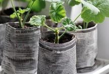 Potted Plants / Get inspired and help your potted plants thrive with these tips + tricks!