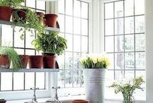 Container Gardening / Find great container gardening ideas and tips for your home!