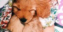 dogos / lil fluffers