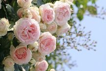 Garden & Patio / by Melanee Selby