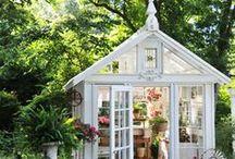 Nanny's Garden / Gardening / by Rebecca Hood