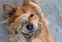 Puppy Lovin / by Sarah Josovitz