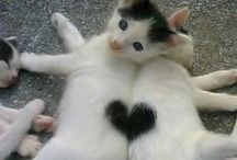 Cats & bigger cats