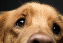 Dogs / by Sperry Gander