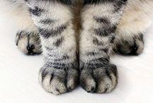 Kitties / by Sperry Gander