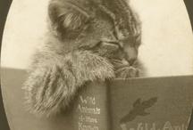 book love  / by Kelli