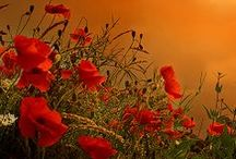 Fresh Tomatoes, Poppies, Sunsets, and Other Favorite Things. / (red)