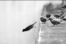 Birds / by Ilonka