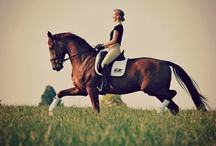 all things equine / by Kelli