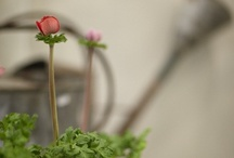 garden / by Kelli