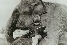 If I Could Be Friends with an Elephant... / ...all would be right with the world.