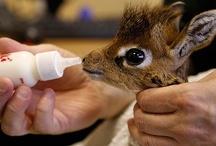 giraffes <3 / by Kaysee Thompson