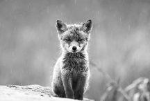 Animals / by Sperry Gander