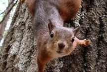 Squirrel! / (just don't say that out loud where the dog can hear you)