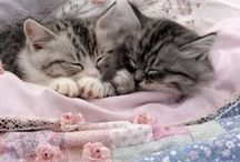 Kitty Fun / Cute pictures of cats, kittens