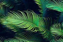 In Green We Gab 360°
