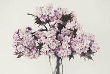 Flowers & Gardens / by Tiffany Makl