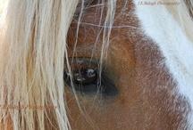 Tiny Horses / by GMC DESIGNS