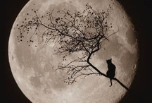 La Luna / Beautiful Magic of the Full Moon / by The Whimsical Witch
