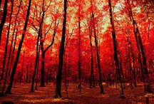 Autumn / by GMC DESIGNS