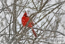 Winter / by GMC DESIGNS