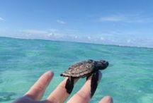 Protect the Sea Turtle