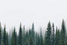 Winter / by Elizabeth Lahendro