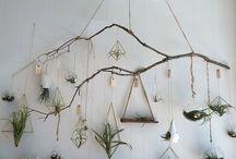 indoor garden / terrariums, planters, succulents and indoor gardening