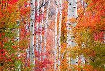 Z  My Favorite Season / Love Autumn / by Sandy Williams Sakalas