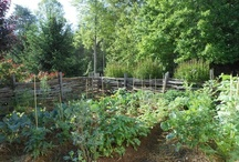Veggie's, Fruit & Herb Gardening / Love growing and canning. / by Gretchen Everman