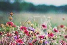 Spring / by Elizabeth Lahendro