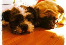 Pets / Dogs..... / by Daniela Travi