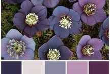 Heathers & Lavendar Pansies & Purple / My Aunt's favorite color was Lavendar, from purple to heather and shades in between / by Kristy Larson