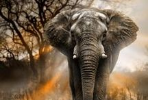 Animals / by Michael Davis
